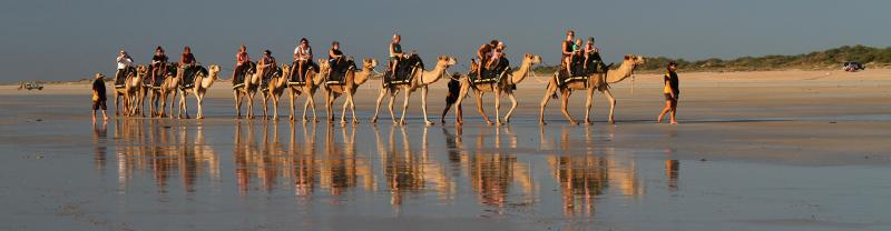 Camel riding on the beaches of Broome, Australia